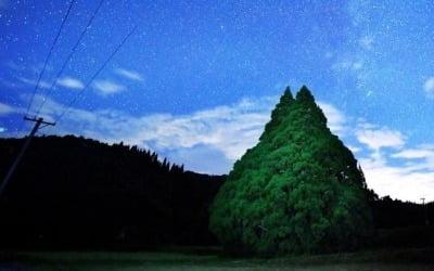 '토토로 진짜로 있었어?'…일본서 잇따라 발견