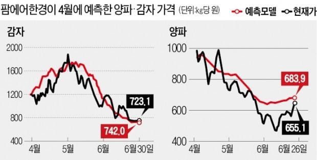 """감자 1200원일 때 """"3개월 뒤 700원 됩니다""""…딱 맞혔네"""