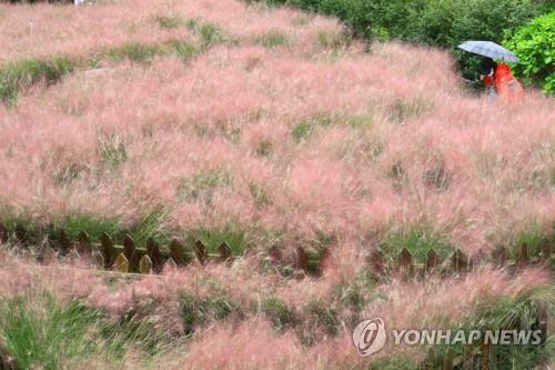 공원묘지 이른 성묘 행렬 '북적'…관광지 '추캉스' 분위기 고조