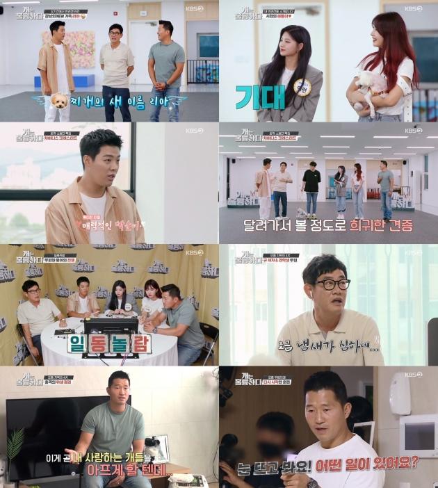 '개는 훌륭하다' /사진=KBS2 제공