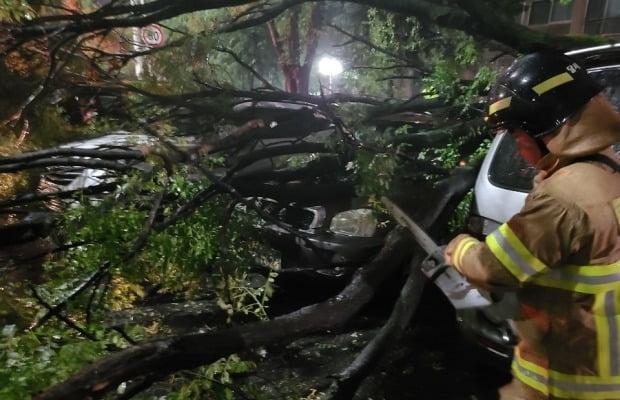 태풍에 쓰러진 가로수를 소방대원이 잘라내고 있다. 사진=연합뉴스