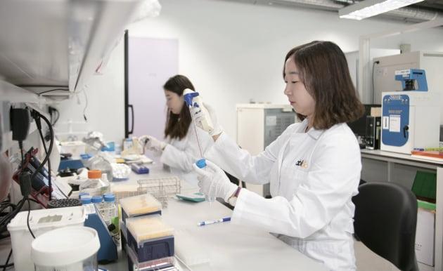 경기 성남시 판교 본사 연구소에서 약물 실험을 하고 있는 에이비엘바이오 연구원들 / 강은구 기자