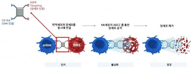 엔케이맥스, 美 아피메드와 표적형 NK세포치료제 공동개발