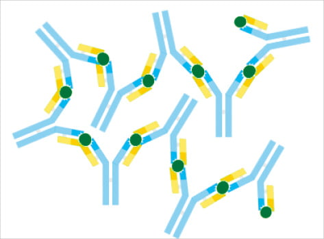 면역계는 병원체가 몸 내부로 들어오는 것을 차단하고, 만약 들어왔다면 이를 제거하고 무력화한다. 사진은 항원과 결합한 항체 모습.