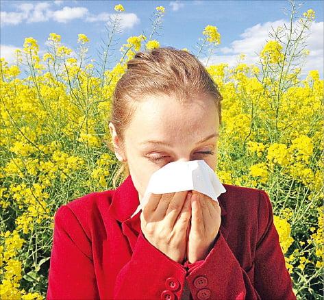 꽃가루 알레르기는 과도한 면역작용의 한 사례다.
