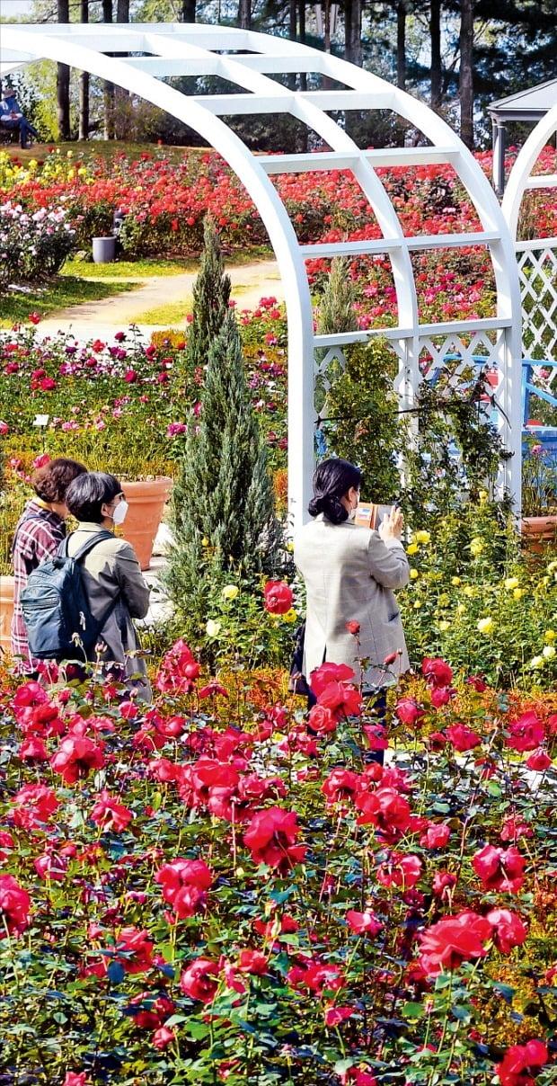 [포토] 서울대공원 가을 장미 보러오세요
