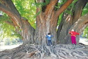 [사진이 있는 아침] 사람을 품어주는 나무