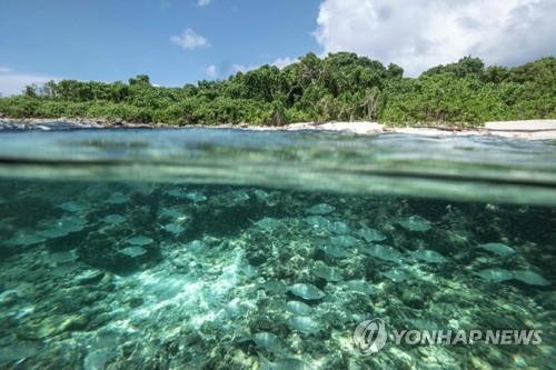 '허니문 천국' 세이셸, 사흘간 대선·총선 실시