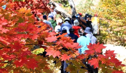 [사진톡톡] '랜선으로 만나는 가을'