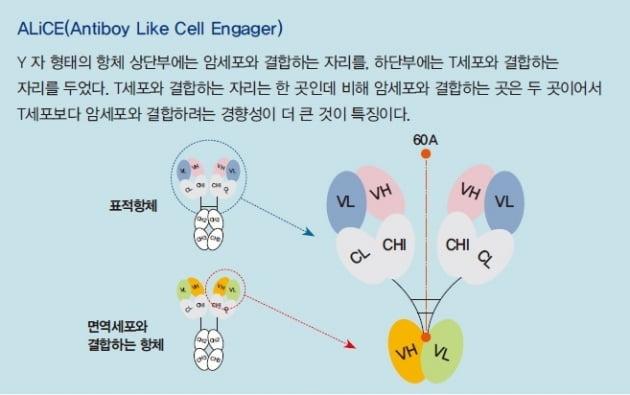 [넥스트 유니콘] 국내 유일 'T세포 인게이저 개발업체' 와이바이오로직스