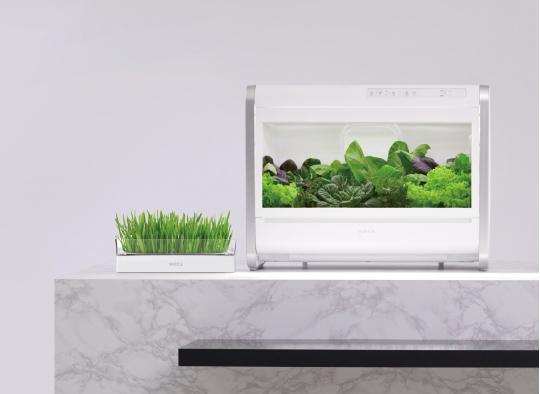 '집 안에 들어온 텃밭'… 쑥쑥 크는 식물 재배기 시장