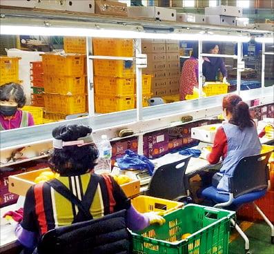 한국농수산식품유통공사는 지난 2월 제주도와 감귤 판매 협약을 맺고 제주 감귤을 온라인으로 판매했다. aT 제공