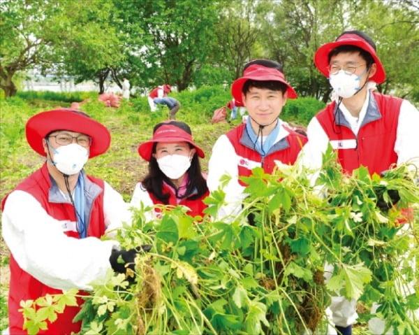 LG화학 임직원들이 서울 여의도 밤섬에서 생태환경 보전 봉사활동을 펼치고 있다.  LG화학 제공