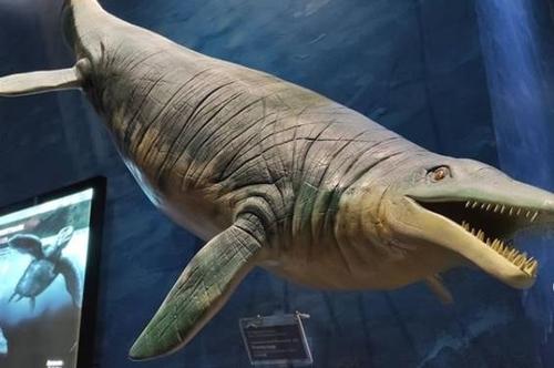 러 꼬마가 발견한 바위…알고보니 2억5000만년 전 어룡 화석