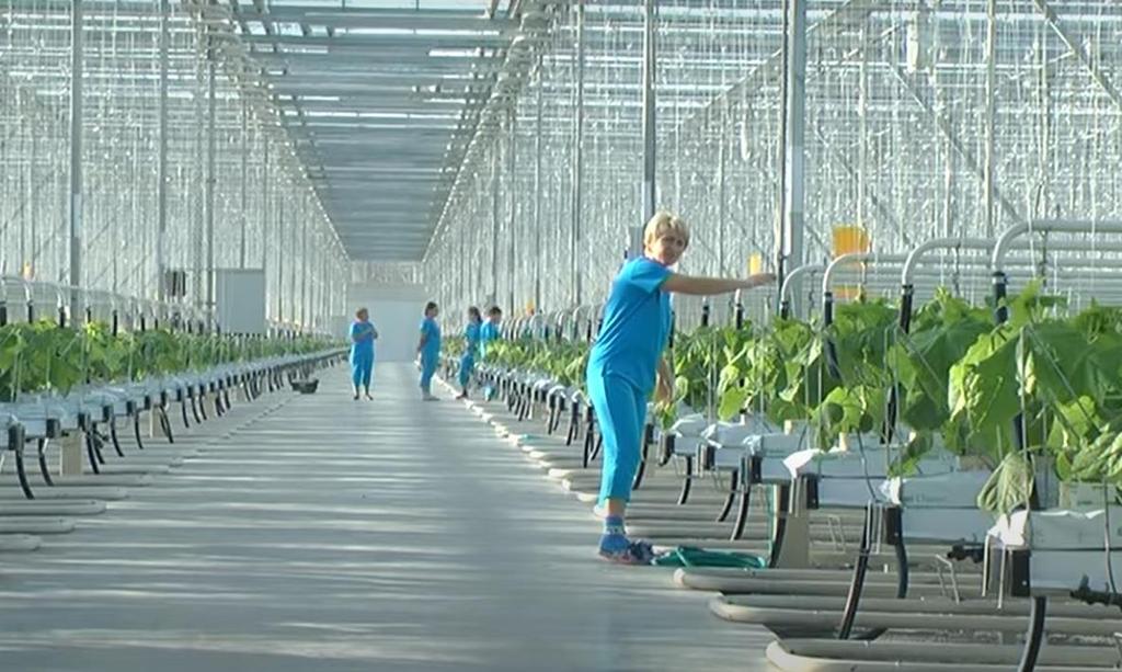 [에따블라디] 채소 대외 의존도 줄이려 '동토'에서 온실재배