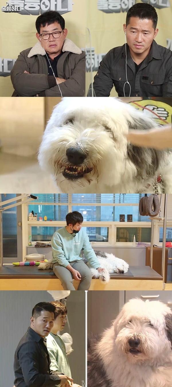 '개는 훌륭하다' / 사진 = KBS 제공