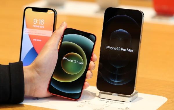 애플의 아이폰12 프로맥스와 아이폰12 미니가 공식 출시한 지난 20일 오전 서울 강남구 가로수길 애플스토어에서 한 고객이 아이폰12 프로맥스와 미니를 비교하고 있다/사진=뉴스1