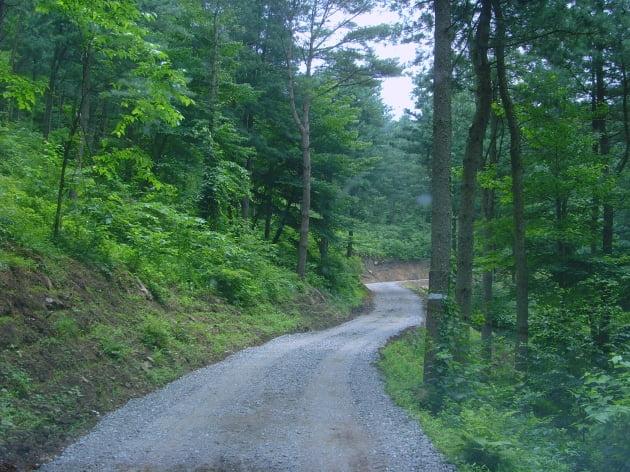 산림청, 임도 확대로 산림산업 경쟁력 강화