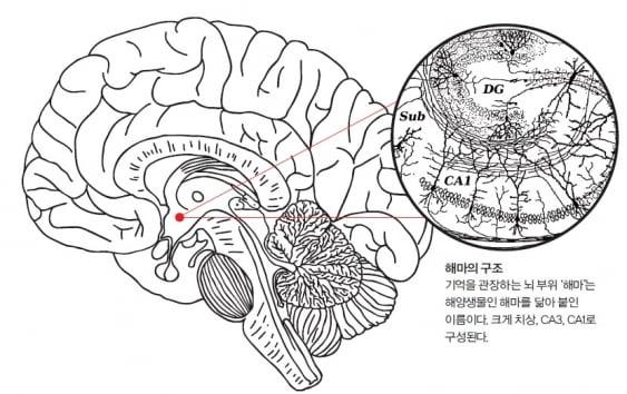 [기초과학 리포트] 기억의 메커니즘