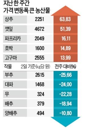 농산물 가격 한 달 만에 반등…상추 64%·깻잎 51%↑