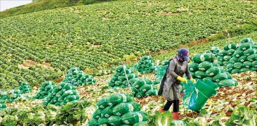 [테샛 공부합시다] '애그플레이션'=농산물 가격 상승이 물가상승 야기하는 현상