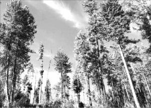 글로벌 석유기업들의 '숲 가꾸기 프로젝트'