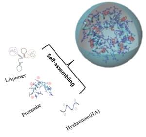 바이오이즈, 암줄기세포 표적항암제(PTD03) 개발