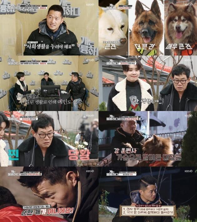 7일 방송된 '개는 훌륭하다'/ 사진=KBS2 제공