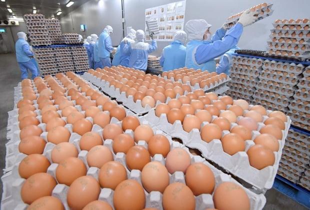 """""""오늘 낳은 달걀, 내일 아침 식탁에""""…'계란왕'의 도전"""