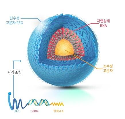 RNAi 치료제 플랫폼 SAMiRNA 자료 제공=바이오니아