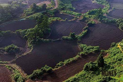 오름에 올라 내려다본 제주 밭담의 풍경. '흑룡만리'의 밭담이 제주 전역에 퍼져 있다. 그 속에 천 년 세월의 삶의 궤적이 담겨 있다.