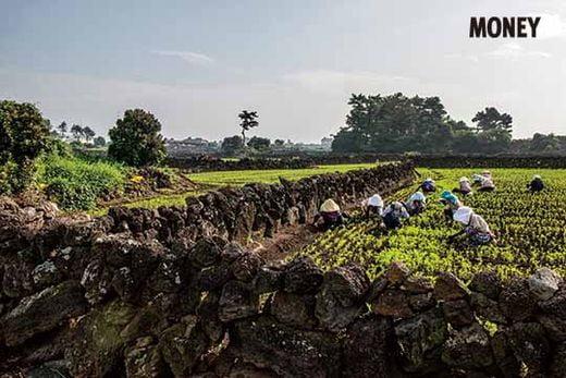 제주 밭담은 제주도 밭농사의 역사와 궤를 같이 한다. 돌밭을 일군 개척정신, 밭담을 쌓아 농경에 활용하는 삶의 지혜가 녹아 있다.