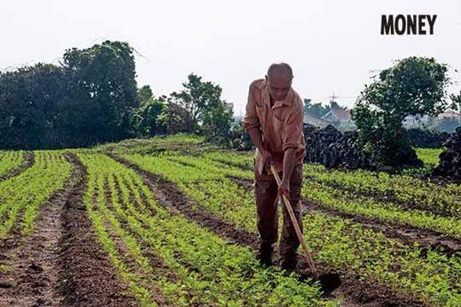"""제주도에서 농사를 짓는 부석희 씨는 유기농 당근을 주로 재배한다. 그는 """"농사짓는 사람은 땅을 갖는 욕심은 있어도 파는 데에는 욕심이 없다""""며 """"제주의 보물인 돌의 가치를 알고 잘 지켜야 한다""""고 말했다."""