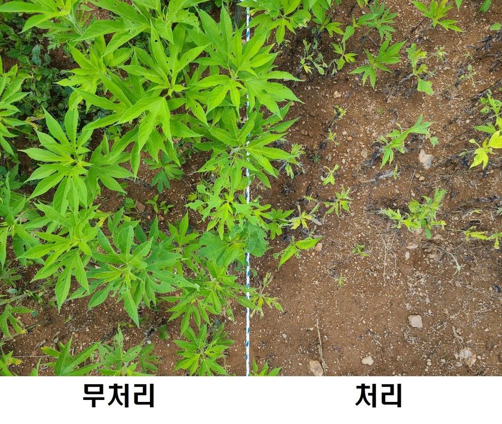 천연당 이용 외래식물 생육 제어…백두대간수목원 특허 출원