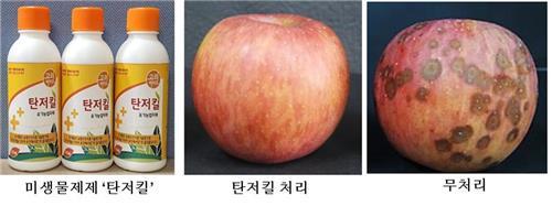안동대 사과 탄저병 방제 미생물 개발…균주 유전체 규명