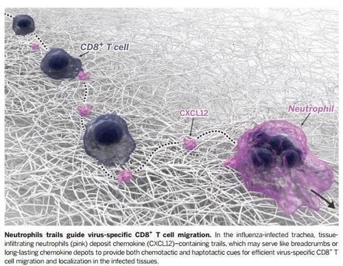 면역치료 효과 없는 암 환자, 이 당단백질이 문제였다