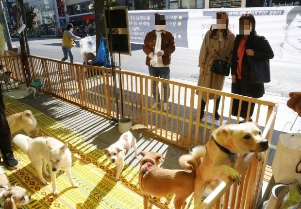 순천 동물병원에서 유기견 100여마리를 '고통사' 했다는 의혹이 제기됐다. 사진은 유기견 입양행사에서 반려인을 기다리는 유기견들의 모습. 사진은 기사와 무관함. /사진=연합뉴스