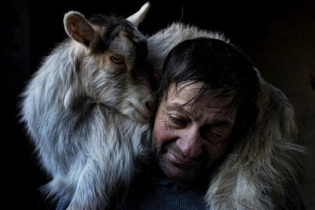 세계 포트폴리오 부문 준우승자 - 호르헤 베셀라, 포르투갈 / Murtosa, Aveiro District, Portugal(포르투갈 아베이로 구 무르토사), 작가의 설명에 따르면 포르투갈 무르토사의 농부인 주앙 발렌테 실바는 일출부터 일몰까지 일한다. 그는 땅이나 동물이 없고 다른 농부들을 위해 일하는 소작농이다. 때때로 동물들을 돌보고 나무를 베는 등 가장 힘든 일을 한다.