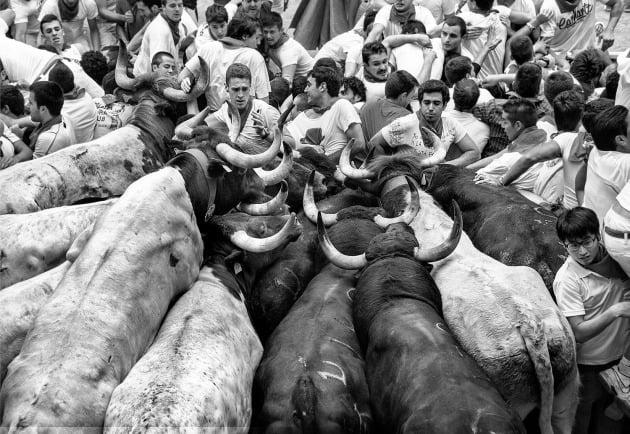 여행 포트폴리오 우승자 - 조르디 코우언, 스페인 / Pamplona, Navarra, Spain(스페인 나바라 주 팜플로나), 축제 기간 동안 팜플로나에서 황소들이 달리는 마지막 지점. 소와 인간이 뒤엉켜 있다.