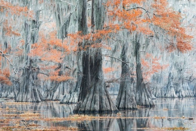 그 외 '풍경과 지구' 포트폴리오 추천작 - 이탈리아 마우로 바티스텔리 / Caddo Lake, Marshall, Texas, USA(미국 텍사스 주 마샬의 캐도 호수), 카도 호수의 안개 낀 아침의 멋진 색깔들. 작가는 이곳의 풍경이 마치 그림인 것처럼 평화롭고 독특하다고 평했다.