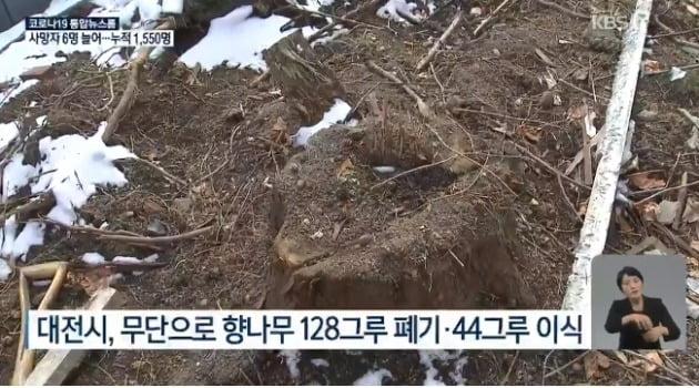 대전시 사과 / 사진 = KBS 뉴스 관련 보도 캡처