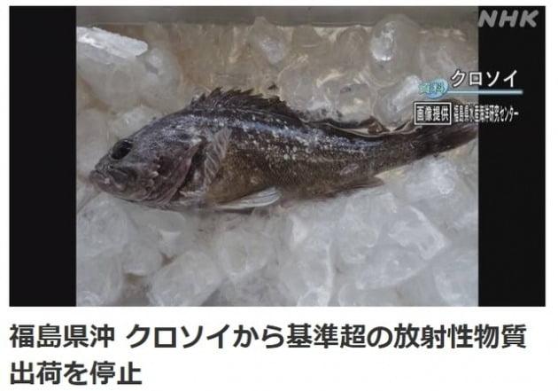 지난 22일 일본 후쿠시마현 신치초 앞바다 8.8km 지점, 수심 24m 어장에서 잡힌 우럭에서 기준치의 5배가 넘는 방서성 물질인 세슘이 검출됐다고 NHK가 보도했다. [사진=NHK홈페이지 캡처]