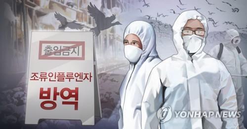 철원 야생 조류 폐사체 34마리서 고병원성 AI 추가 확인