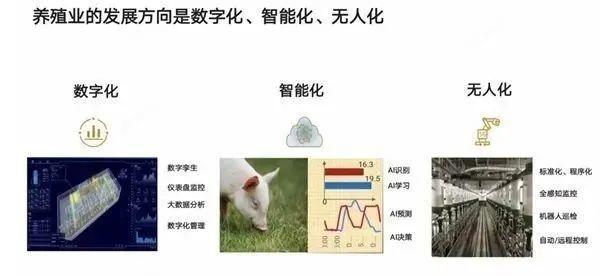 미국 고강도 제재로 코너 몰린 화웨이, 돼지도 키운다