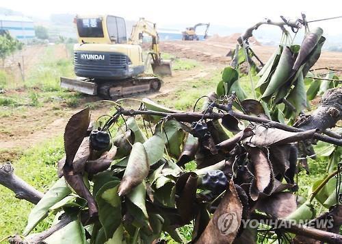 충북도, 과수화상병 피해농가 대체작목 육성 지원