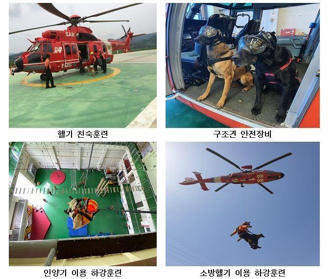"""119구조견, 소방헬기 타고 수색훈련…""""실종·조난자 신속 구조"""""""