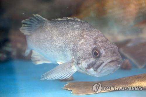 어민 울린 37억 상당 '활어 유통 사기' 9명 적발…3명 구속기소(종합)