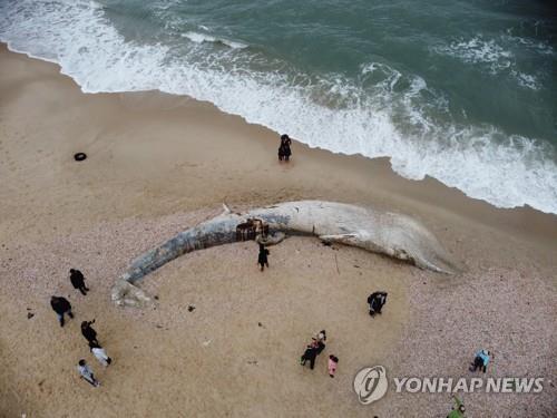 죽은 채 해변에 밀려온 17m 고래 폐에서 '시꺼먼 액체'
