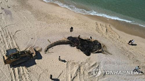 해안 160㎞ 오염 기름유출 조사 이스라엘, '비공개 명령' 논란
