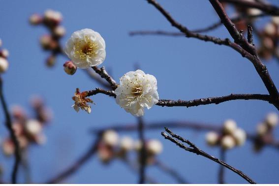국립공원 봄꽃 지난달부터 개화…3월 중순부터 전국서 감상 가능